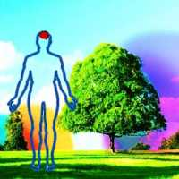 THE ENERGY OF TREES FOR OUR WELLBEING
