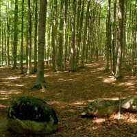 YOGA E FOREST THERAPY Monte Amiata