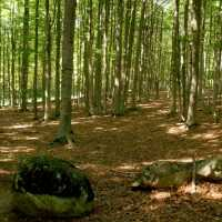YOGA E FOREST THERAPY Monte Amiata
