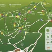 Tenuta dell'Annunziata - Il Bosco Bioenergetico