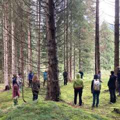 FORMAZIONE GUIDE DI FOREST BATHING